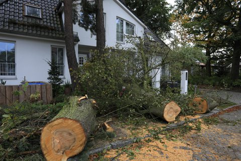 Sturmschäden in Brandenburg. Diese Linde hat die Feuerwehr schon zersägt. Foto: Thilo Rückeis