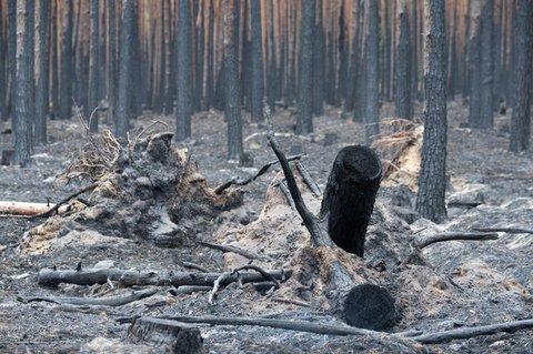 Verbrannte Bäume liegen in einem Waldstück bei Treuenbrietzen.