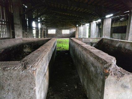 Steinbrocken, in denen die Pflanzen getrocknet wurden.