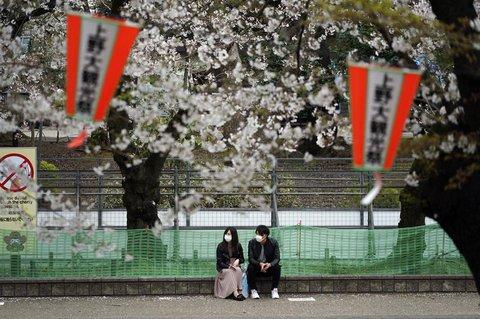 Kirschblüte im Ueno-Park in Tokio