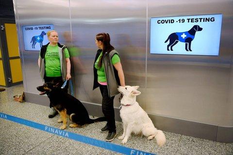 Wer trotz Infektion nach Helsinki reist, könnte von Corona-Spürhunden entlarvt werden.