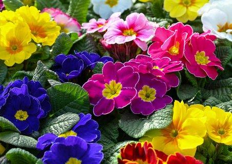 Blühende Aussichten für Brandenburger: Am heute dürfen Gartenmärkte und Blumenläden unter Auflagen wieder öffnen.