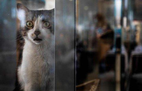 Unterstützung für Katz' und Hund: Von der Pandemie betroffene Tierheime können ab Samstag eine finanzielle Hilfe des Bundes beantragen.